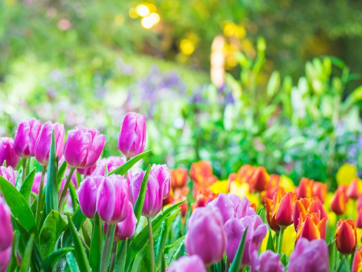 Planning a springtime move?