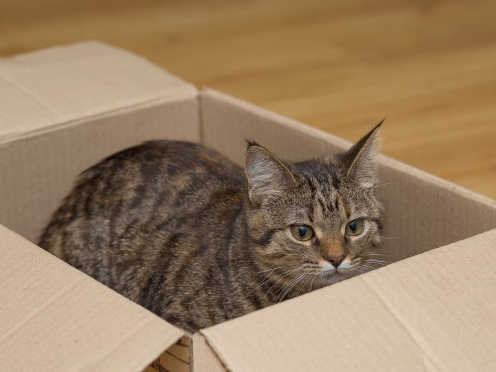 How can I make the move comfortable for my pets?